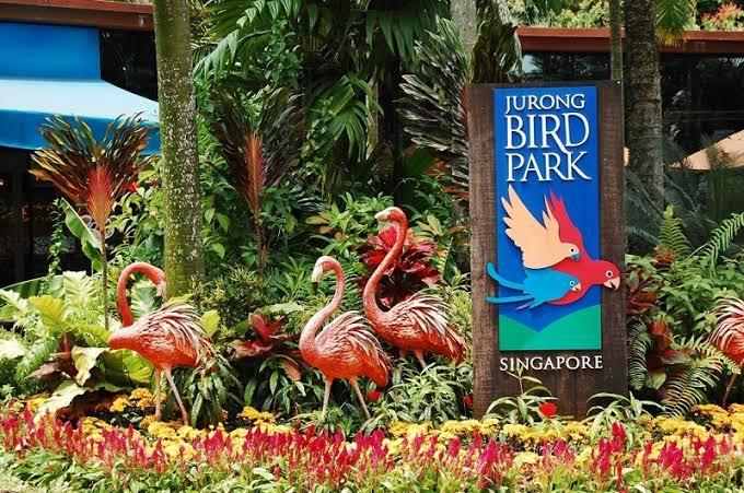 Jurong Bird Park - Background