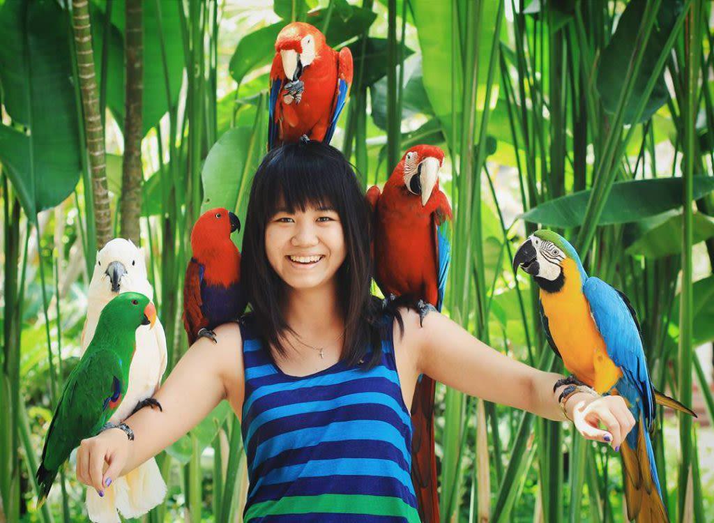 Bali Bird Park - Background