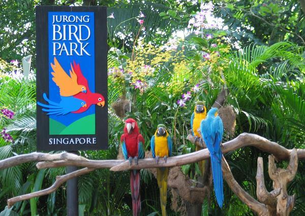 Jurong Bird Park Singapore - Background