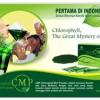 CMP (Chlorophyll Mint Powder), Minuman Kesehatan, Bisa Buat Diet Juga !!!
