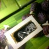 JUAL BENIH BIBIT Kelapa SAWIT UNGGUL IMPOR-LOKAL Costarika, Tenera MALAYSIA dan  Marehat, Socfindo MEDAN
