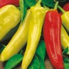 Bibit Benih Cabe Cabai Hot Wax Hungarian Pepper MIX