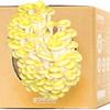 GrowBox  Jamur Tiram Kuning Pleurotus citrinopileatus