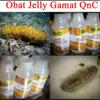 Qnc Jelly Gamat herbal Paling Ampuh Dan Mujarab