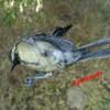 Jaring Perangkap Burung / Jaring Pagar Nylon Putih (Twien : 0.28