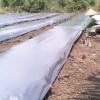 Plastik Mulsa Hitam Perak Tebal 0.08mm Lebar 250cm