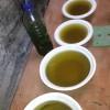 Starter Green Water Micro Algae