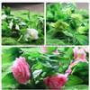 Decorative Vine Flower / Bunga Rambat