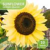 10 Seed - Sunflower Lemon Queen (Benih Bunga Matahari)