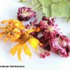 Buku Seni Membuat Herbarium