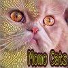 momo cats