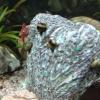 Benz Aquarium