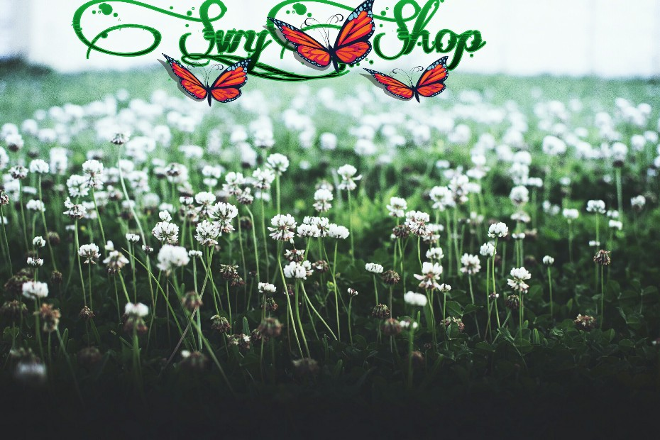 Swy-Shop