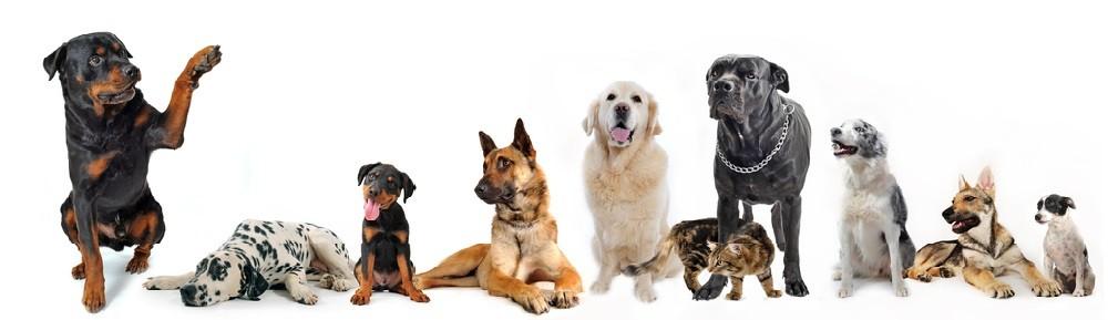 Lala Pet Shop
