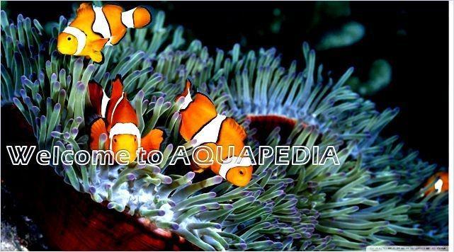 Aquapedia