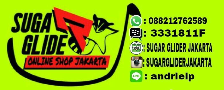 SUGAR GLIDER JAKARTA