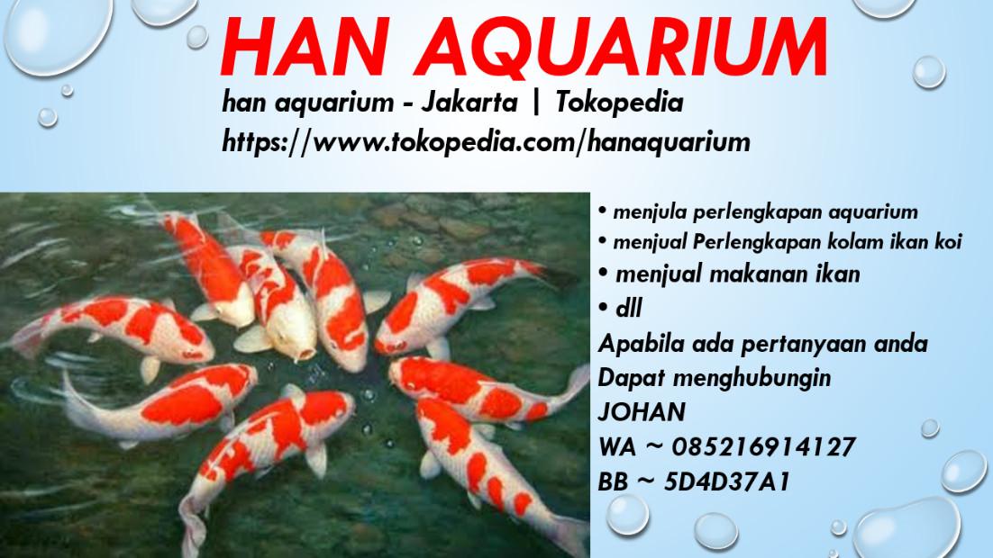 han aquarium