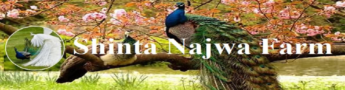 Shinta Najwa Farm