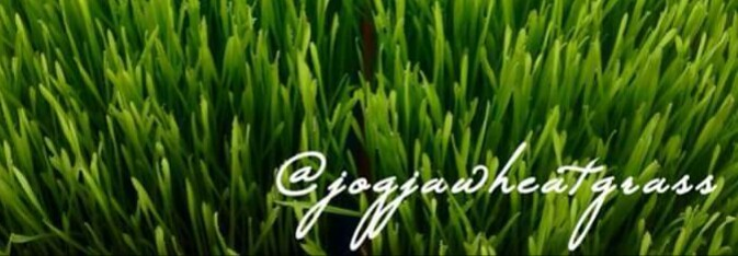 Jogja Wheatgrass
