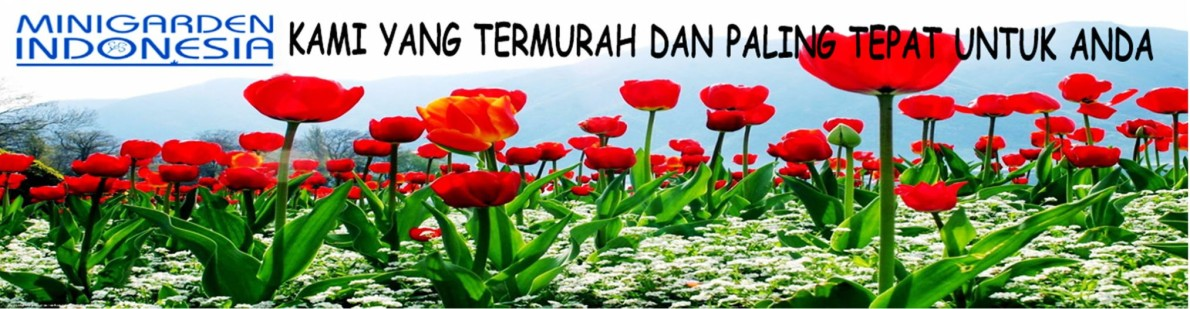 Minigarden Indonesia