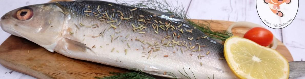 Queen Fish Indonesia
