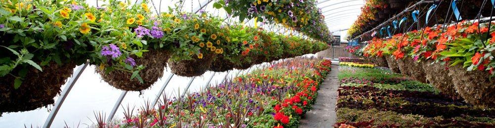 ibad garden