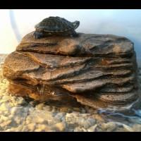 Basking Ram | Turtle Bank + Water Pump