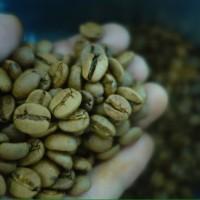 Jual Biji kopi sangrai robusta dampit 500g Murah