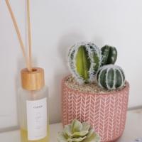 Dekorasi Pot Kaktus Succulent Artificial/Plastik