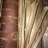 Gula aren asli gula merah 1.2 KG