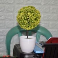 Pot Shabby - Pohon Bonsay