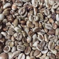 GREEN BEAN ROBUSTA GAYO natural proses 500 gr (biji mentah)