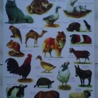 Mainan Poster Edukasi Seri Binatang 02
