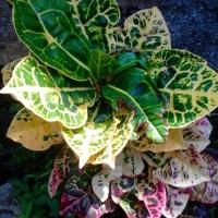 Jual tanaman indoor dan tanaman kering