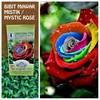 BIBIT BUNGA MAWAR MISTIK PELANGI (MYSTIC RAINBOW R