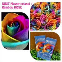BIBIT RAINBOW ROSE / MAWAR PELANGI