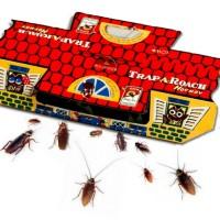 Rumah Kecoa - Basmi Tuntas Kecoa Tanpa Insektisida