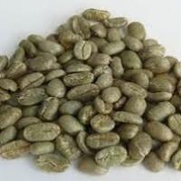 Green Beans Kopi Luwak Gayo