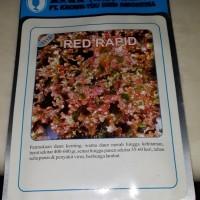 """Benih Selada Merah / Red Lettuce - """"Red Rapid"""""""