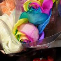 Benih Mawar Pelangi / Rainbow Rose (Import)