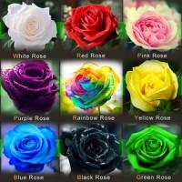 Benih Biji 9 Macam Mawar import : Rainbow Pink Black White Red Purple
