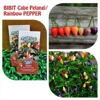 BIBIT CABE / BENIH / Cabai Bolivian Rainbow