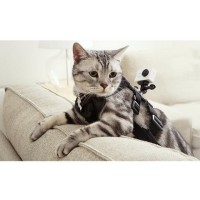 Xiaomi Yi Cat Harness for Xiaomi Yi & GoPro - Black