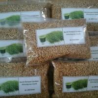 harga Benih Biji Wheat Grass 250gr/rumput Gandum Tokopedia.com