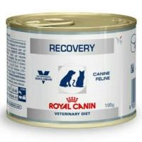 harga Makanan Kucing Basah Royal Recovery Tokopedia.com