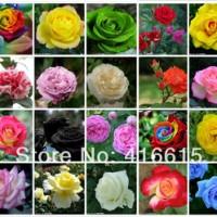 Jual Benih / Bibit / Biji Bunga Mawar Mix 20 jenis Murah