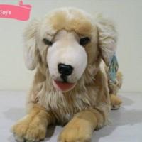 28++ Anjing golden retriever kecil terbaru