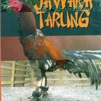 harga Beternak Ayam Bangkok Aduan Jawara Tarung Tokopedia.com