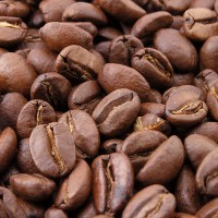 Jual kopi luwak roasted beans Murah