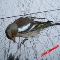 harga Jaring Burung / Jaring Perangkap Burung / Jaring Jebak Burung Tokopedia.com